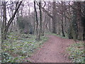 TQ4465 : Footpath in Darrrick Wood (2) by Mike Quinn