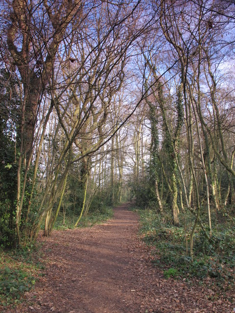 Footpath in Darrrick Wood (3)