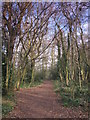 TQ4465 : Footpath in Darrrick Wood (3) by Mike Quinn