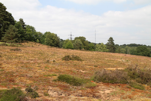 Heathland at The Lodge