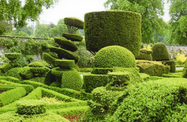 Topiary in the garden at Levens Hall
