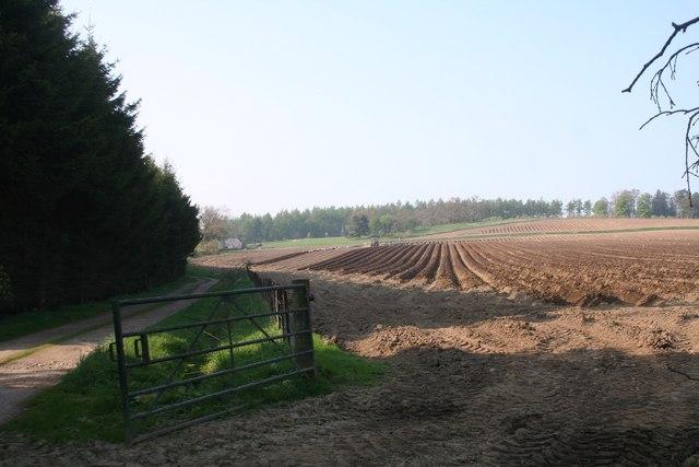 Culfosie Fields