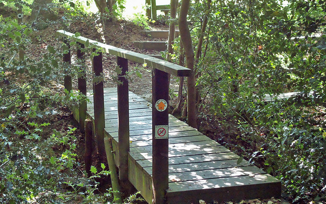 Footbridge into Birch Wood