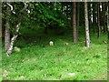 NS8467 : Hillend Reservoir, marker stone No. 65 by Robert Murray
