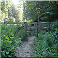 TL7906 : Fenced bridleway by Roger Jones