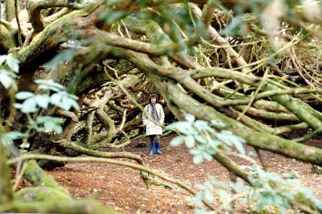 Crom National Trust estate on Upper Lough Erne
