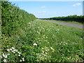 TF1003 : High Field Road, near Ufford by Marathon