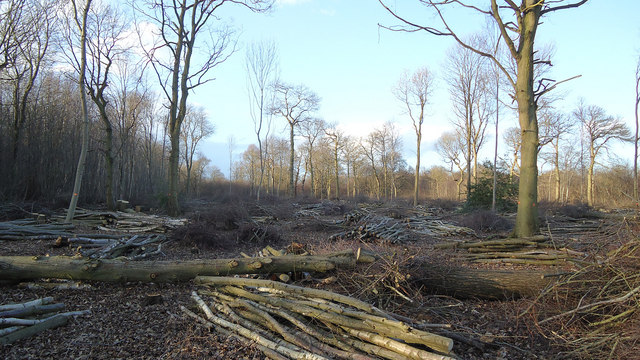 Clearing the woodland, Chalkney Wood