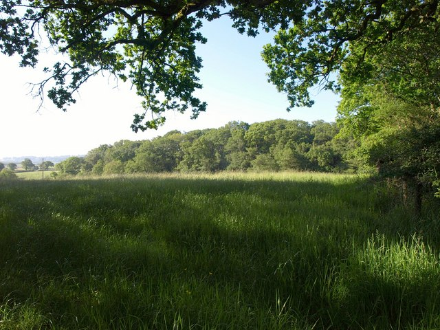 Field surrounded by trees, Stoney Lane Hill
