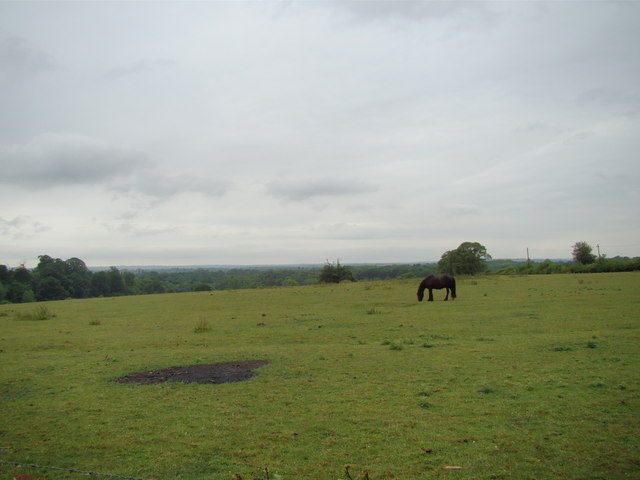 View of Petts Wood from the Hawkwood Estate path #4