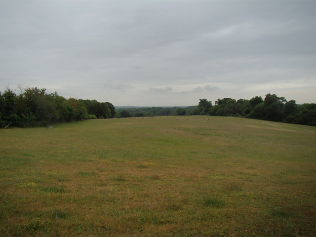 View of Petts Wood from the Hawkwood Estate path #6