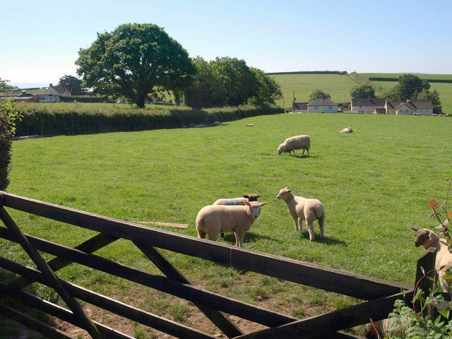Sheep near Stanterton