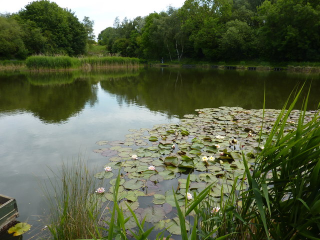 Fishing pond with water lilies tibshelf peter barr cc for Square fish pond