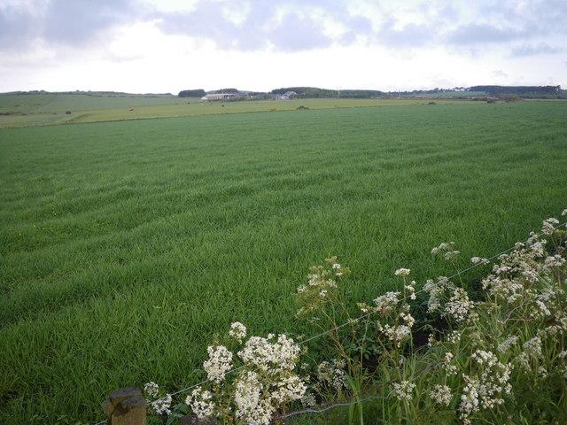 Fields northwest of Quoscies