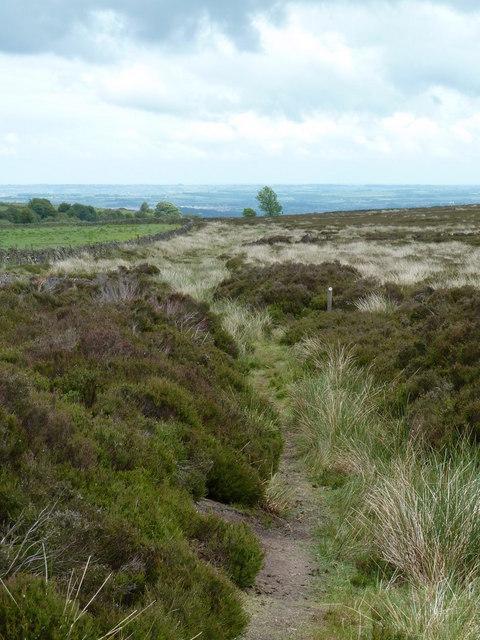Moorland footpath, Beeley Moor access land