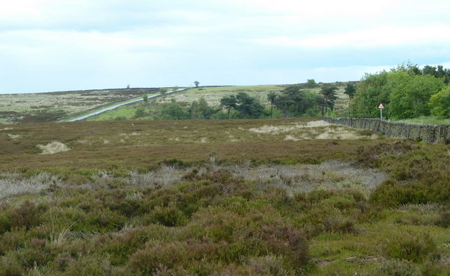 Moorland by walled lane