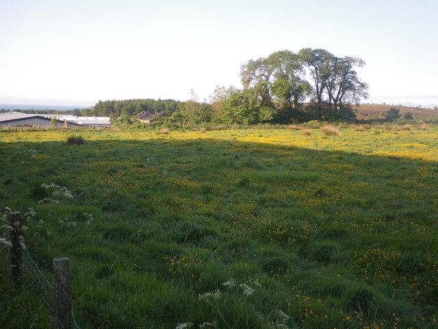 Badentoy Farm