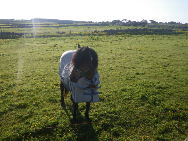 Horse clad for the morning chill