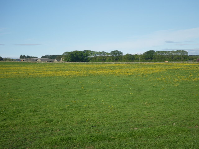 Expansive green fields