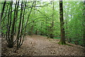 TQ8131 : HWLT, Strawberry Wood by N Chadwick