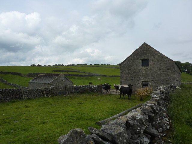 Cattle at Nether Barn