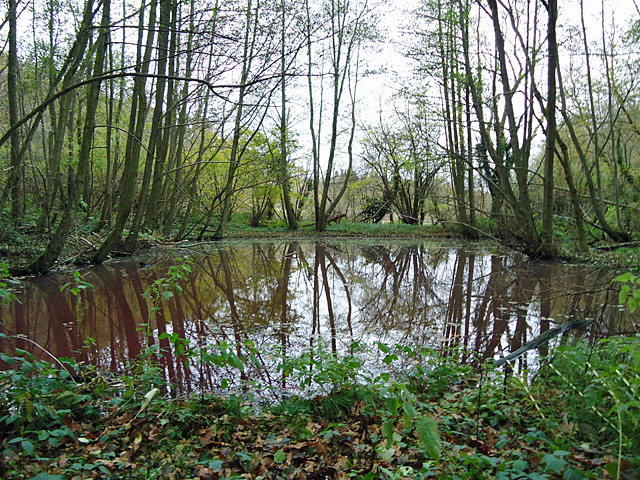 Pond in Spouse's Grove