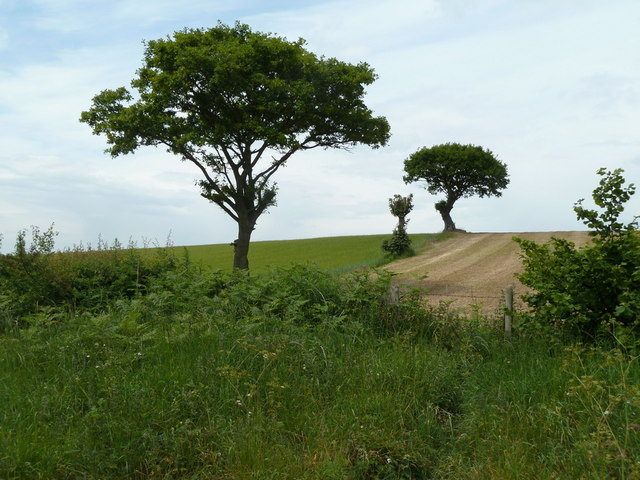 Field and trees north of Grasscroft Wood