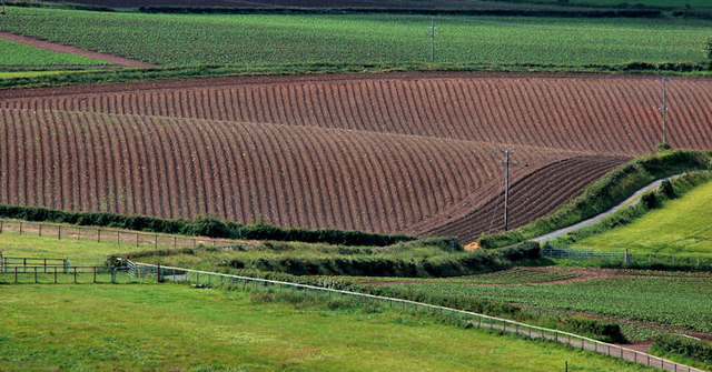 Ploughed field near Scrabo, Newtownards