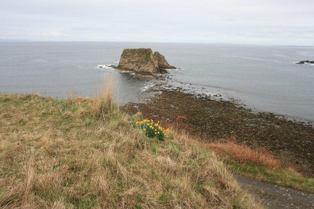 Daffodils near Brough