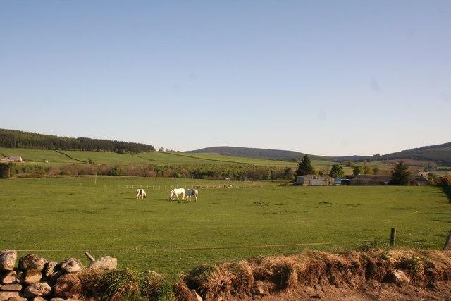 Corsindae Horses