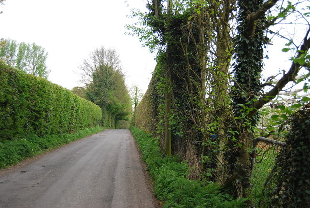 Lane east of Sheerland Farm