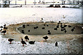 SE6250 : Frozen Lake at York University by David Dixon