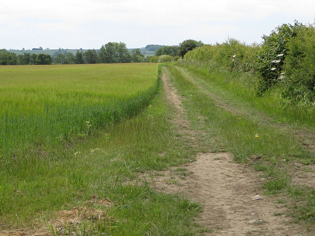 Farm track along the edge of a barley crop