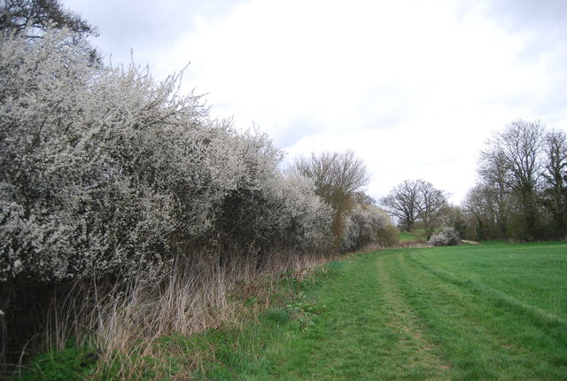 Blossom by the West Sussex Literary Trail