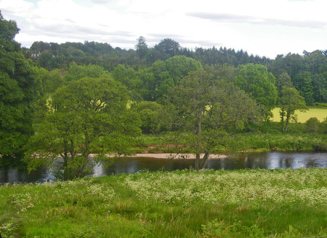Umbellifer meadow south of the River Dee