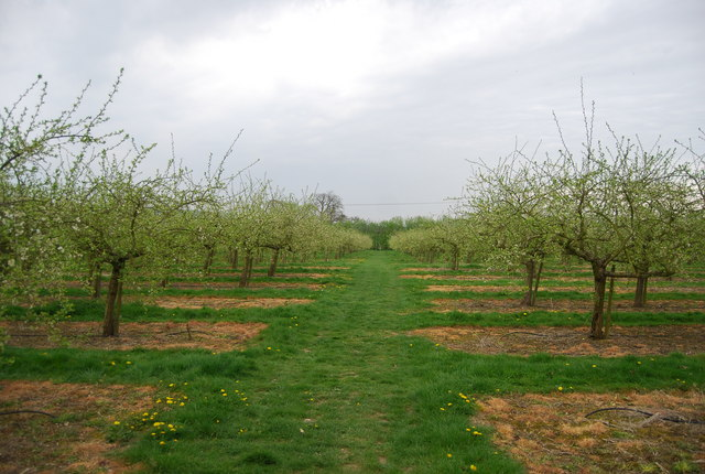 Orchard by the path