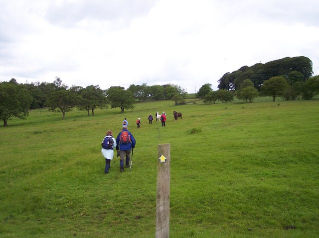 Field path passes through horses grazing near Hollins Farm