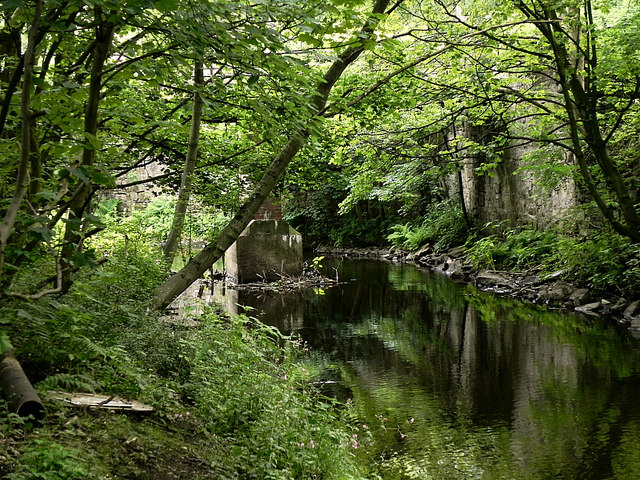 River Tame, Scout Green