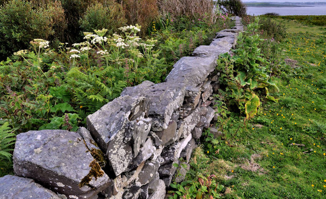 Drystone wall, Lighthouse Island (2)
