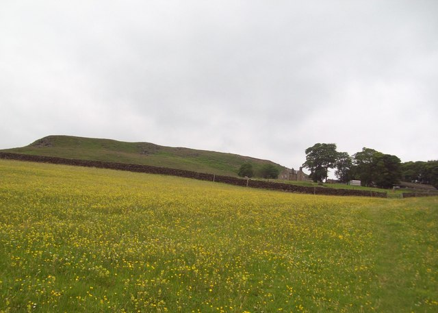 Buttercup Meadow near Crookhill Farm