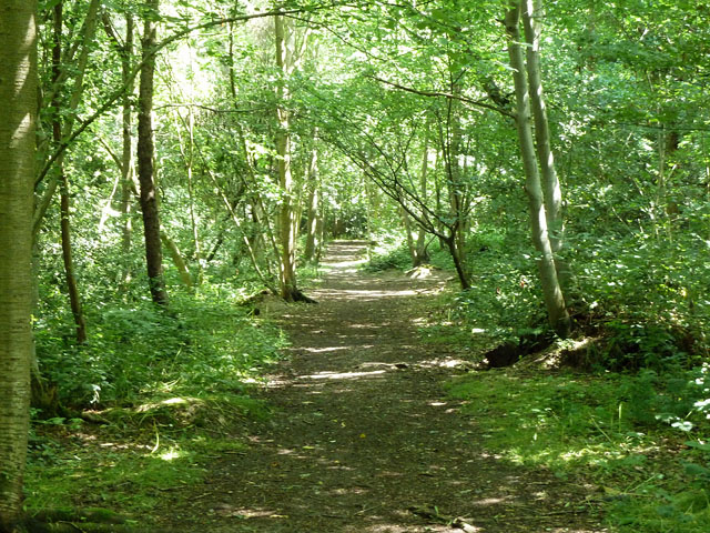 Path in Well Wood