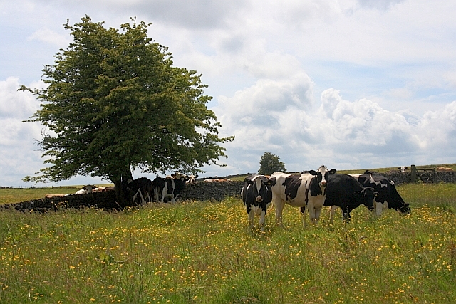 Dairy Pasture off Cardlemere Lane