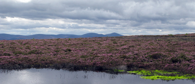 Heather moor with pool east of Broom Hill