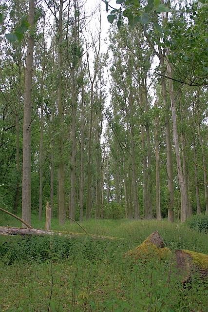 Wigger Dale Plantation