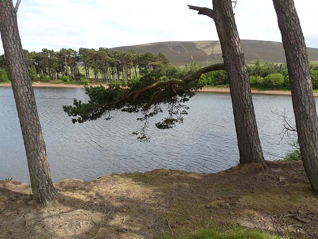 Pine trees beside Harlaw Reservoir