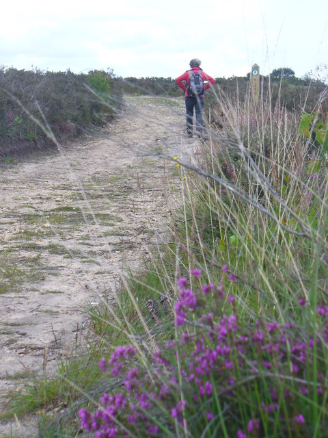 Path on Albury Bottom