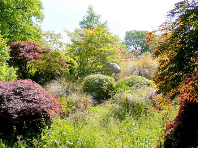 The Garden House garden in June - 20
