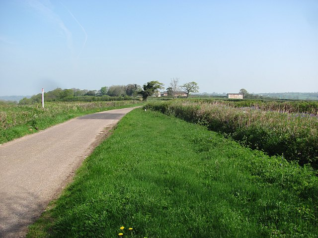 Viney Lane