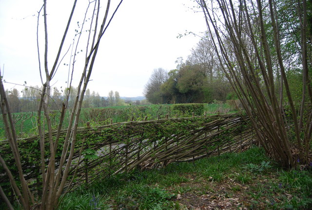 Coppiced / pleached fencing, Godinton Lane