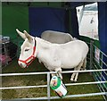 SJ9593 : Donkeys at the Fete by Gerald England